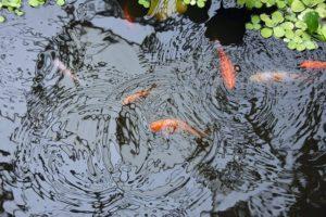 create your own beautiful pond lake pool, firestone-epdm-geogard-1-14mm