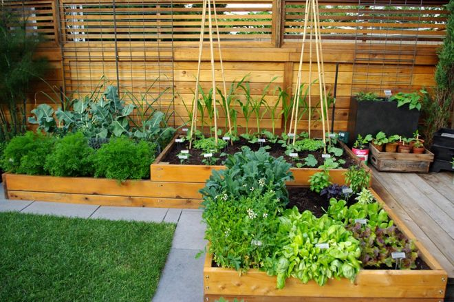Contemporary Garden by Aloe Designs